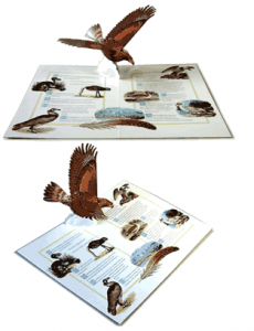 how to go about making a pop-up book